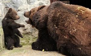 canadian-banks-like-bears